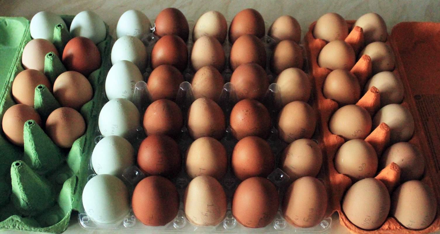 podczas montażu jajka