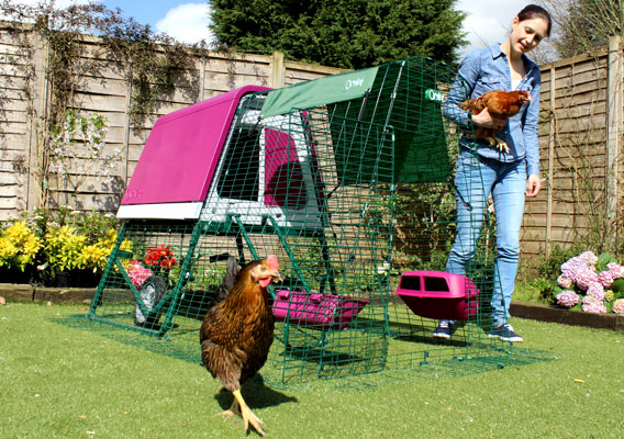 Eglu Go UP chicken coop and run set up in garden with chickens roaming.